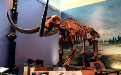 Face to Face with Prehistoric History at Ithaca's Museum of the Earth